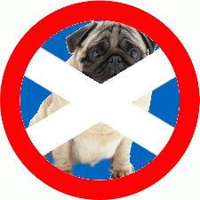 no-pugs